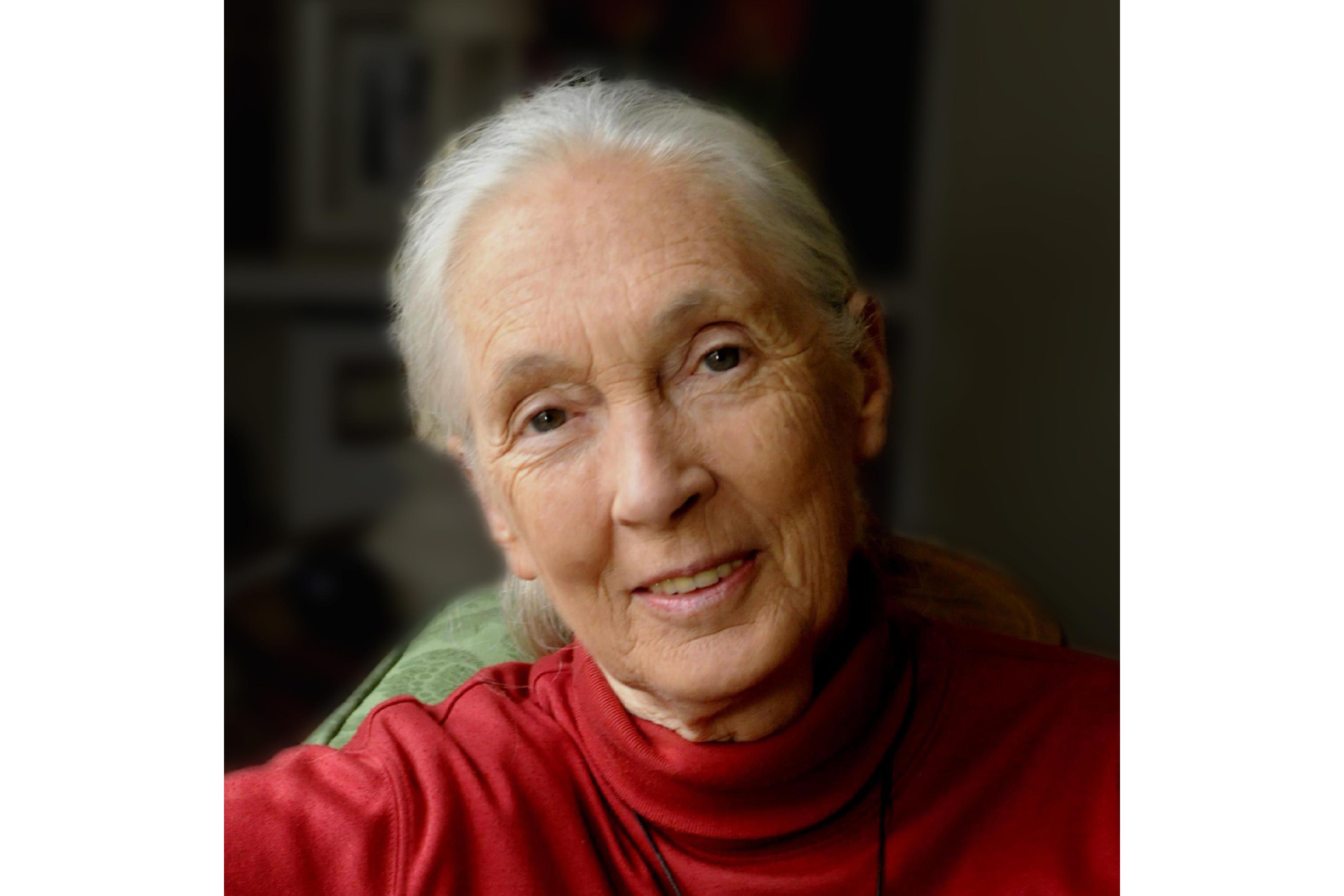 Jane Goodall, PhD, DBE